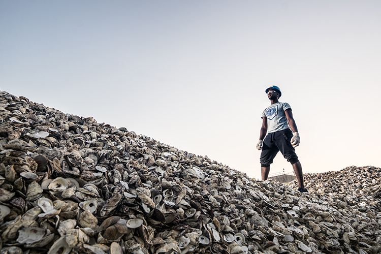 Teenage boy in a hardhat standing atop a mountainoues pile of discarded oyster shells