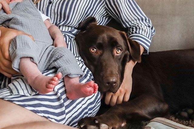Ahh kijk dit nou! 😍 Altijd spannend wat de huisdieren vinden van de nieuwste aanwinst in huis! Deze lieve hond vond het al heerlijk om de voetjes af te likken en kwam er lekker bij liggen (oké, met een klein beetje moeite 😇) #newborn #newbornshoot #dogwithbaby #photography #lifestyle #labrador #sweetdog #babyboy #familyshoot
