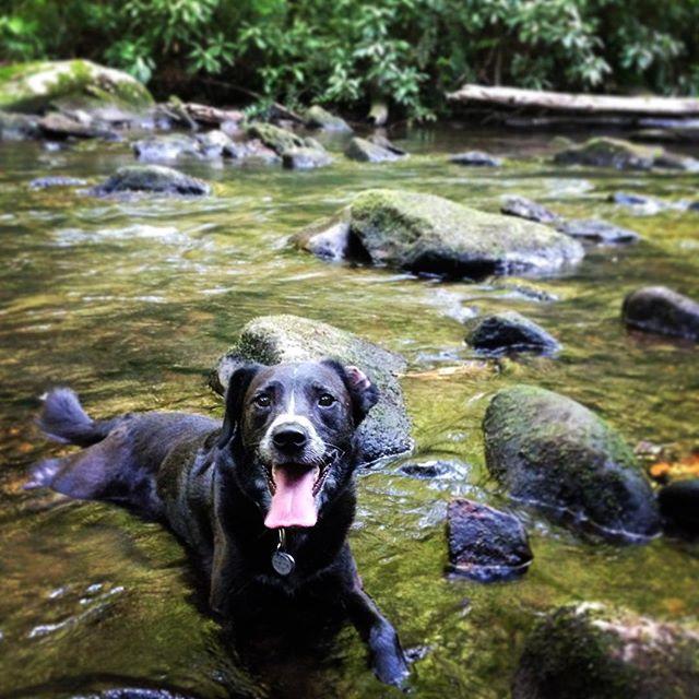 Frida's really good at the cool down. #traildog #mtb #wnc