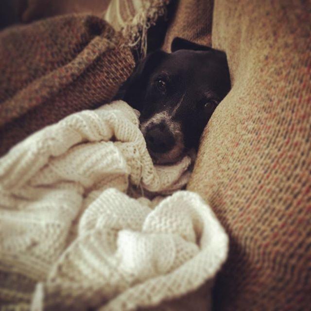 Frida loves Sunday mornings #lazydog