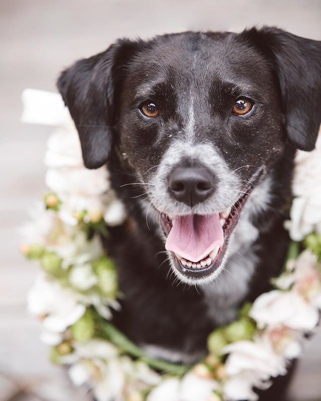 Did someone say #nationaldogday? This is from our wedding where Frida served as the pup of honor.  Can't even believe that was almost a whole year ago!