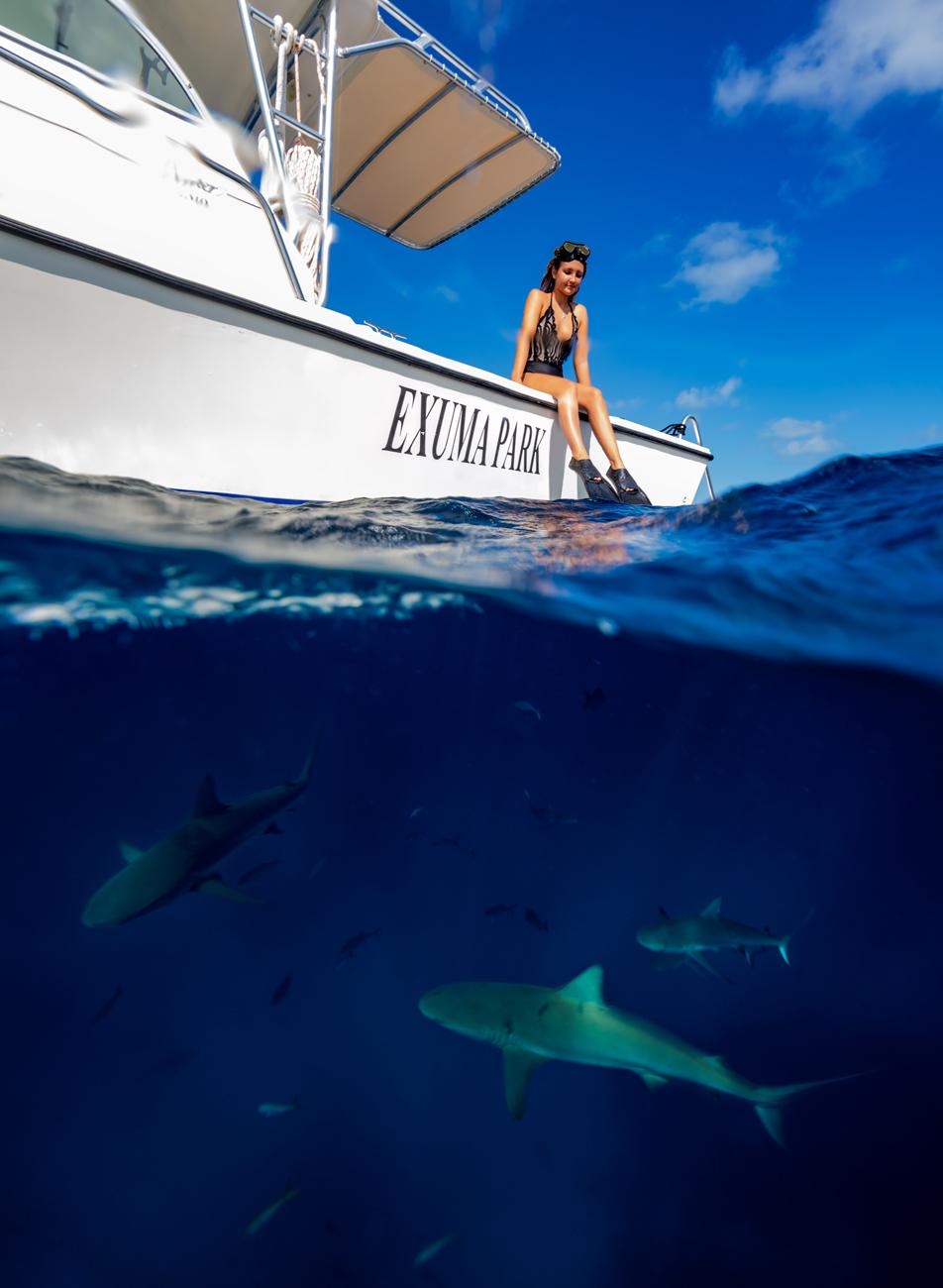 exuma_bnt_sharks.jpg