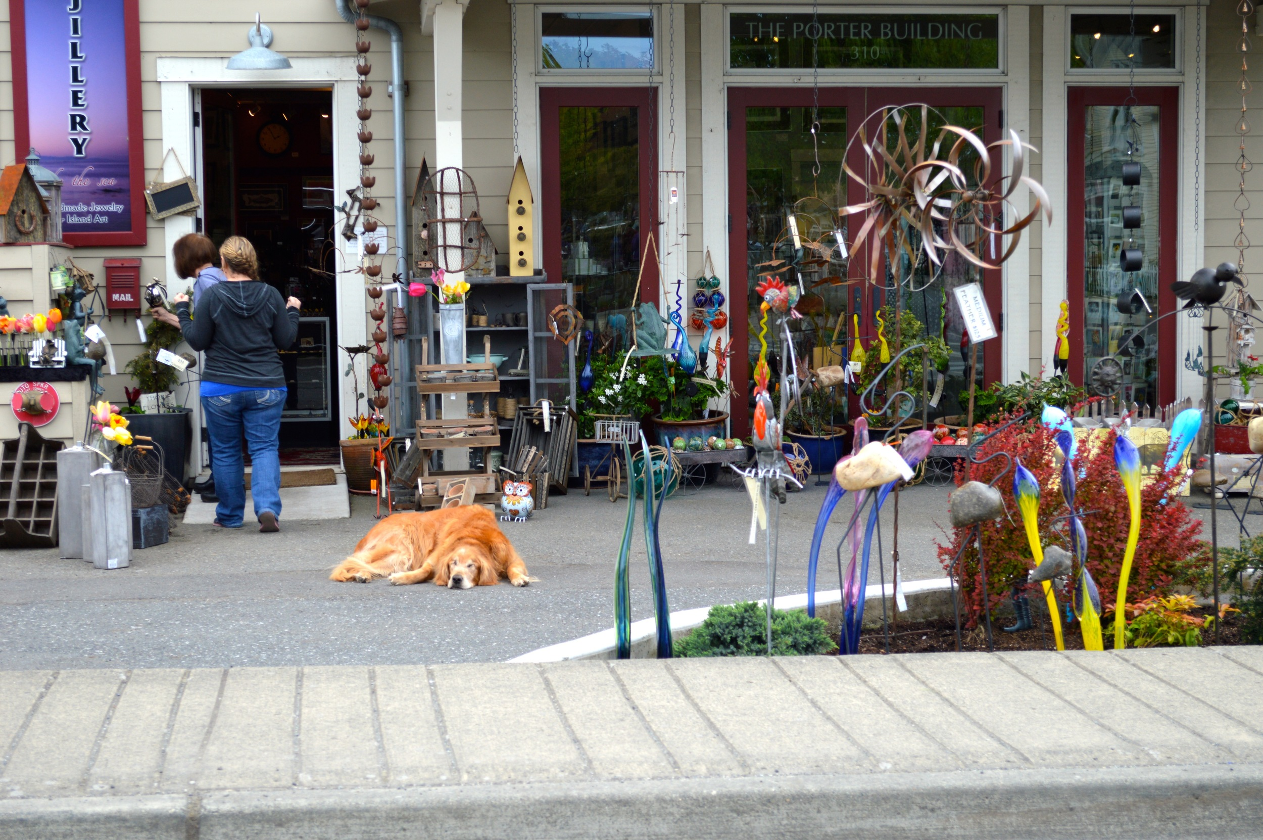 Guard Dog in Eastsound, Orcas Island