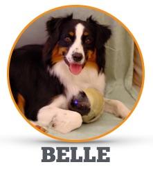 Meet_Belle.jpg