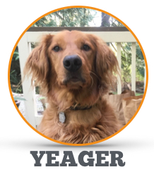 Meet_Yeager.png