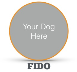 Your_Dog
