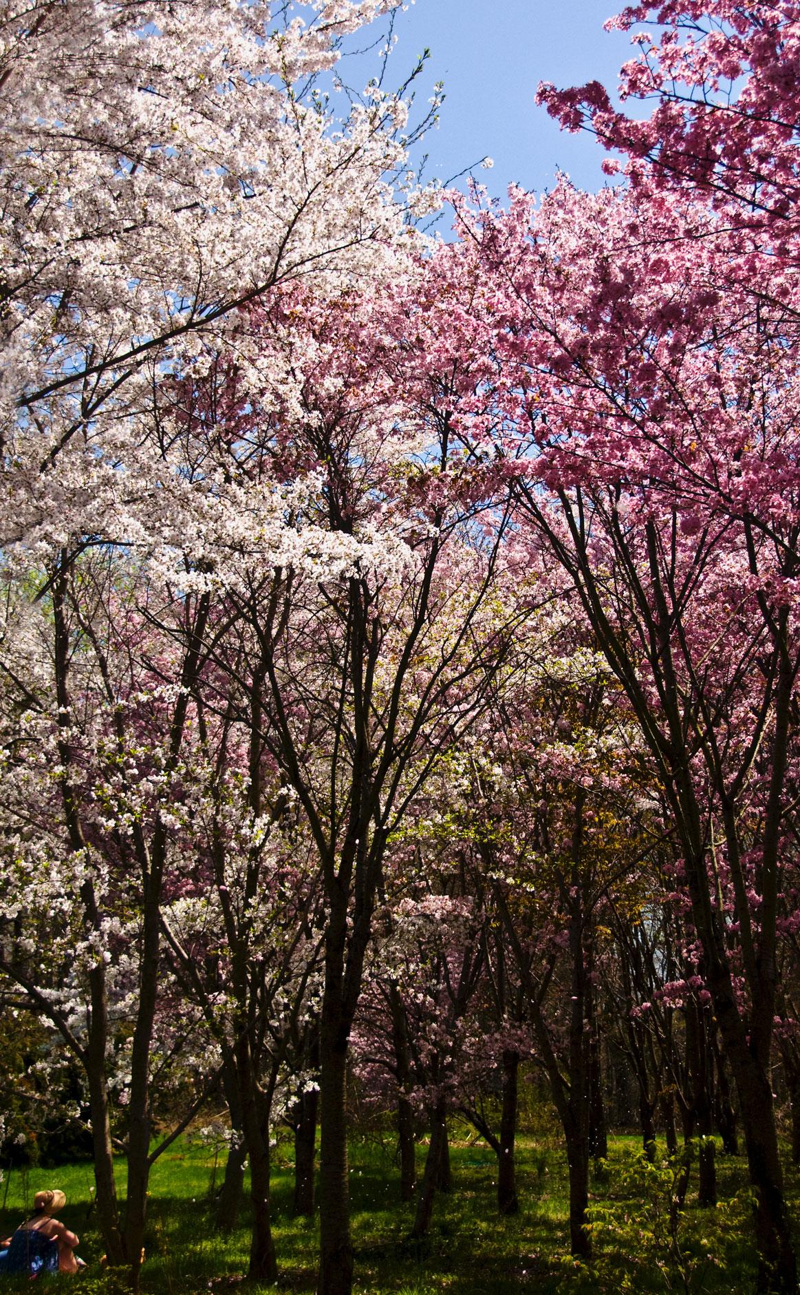 Arboretum-4-10--afternoon-w.jpg