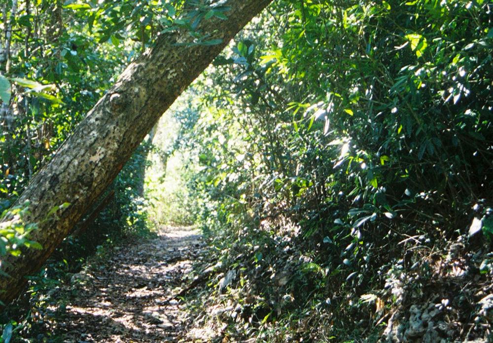 Adentrarse en el verdor de los bosques de Puerto Rico es una experiencia fascinante. Foto: Pamy Rojas