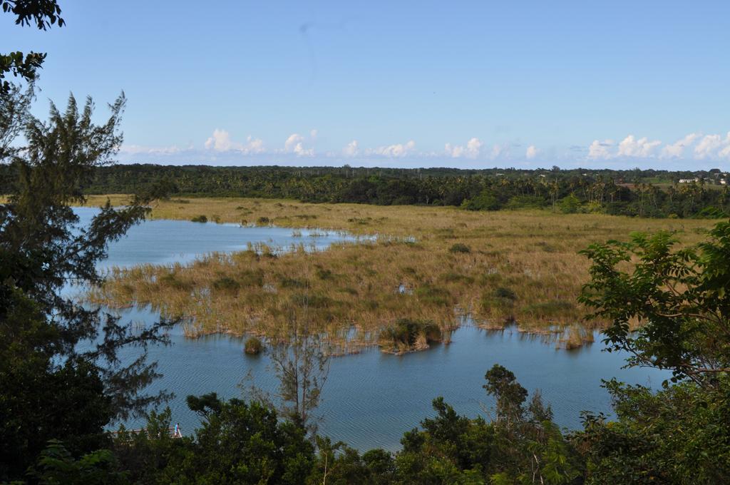 La laguna Tortuguero es un espacio perfecto para energizarse con la naturaleza. Foto: Pamy Rojas