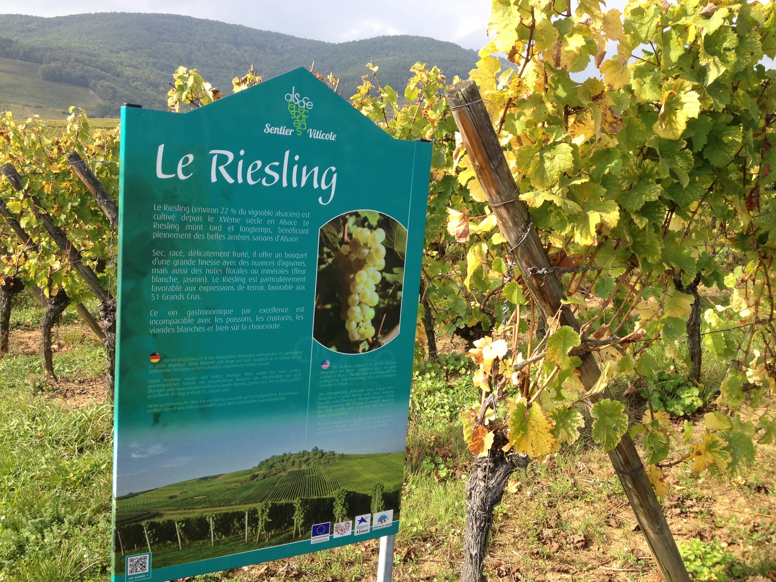 The Sentier Viticole  (Wine Route in French) signs inform visitors about types of grapes and the production process. Photo: Bruny Nieves