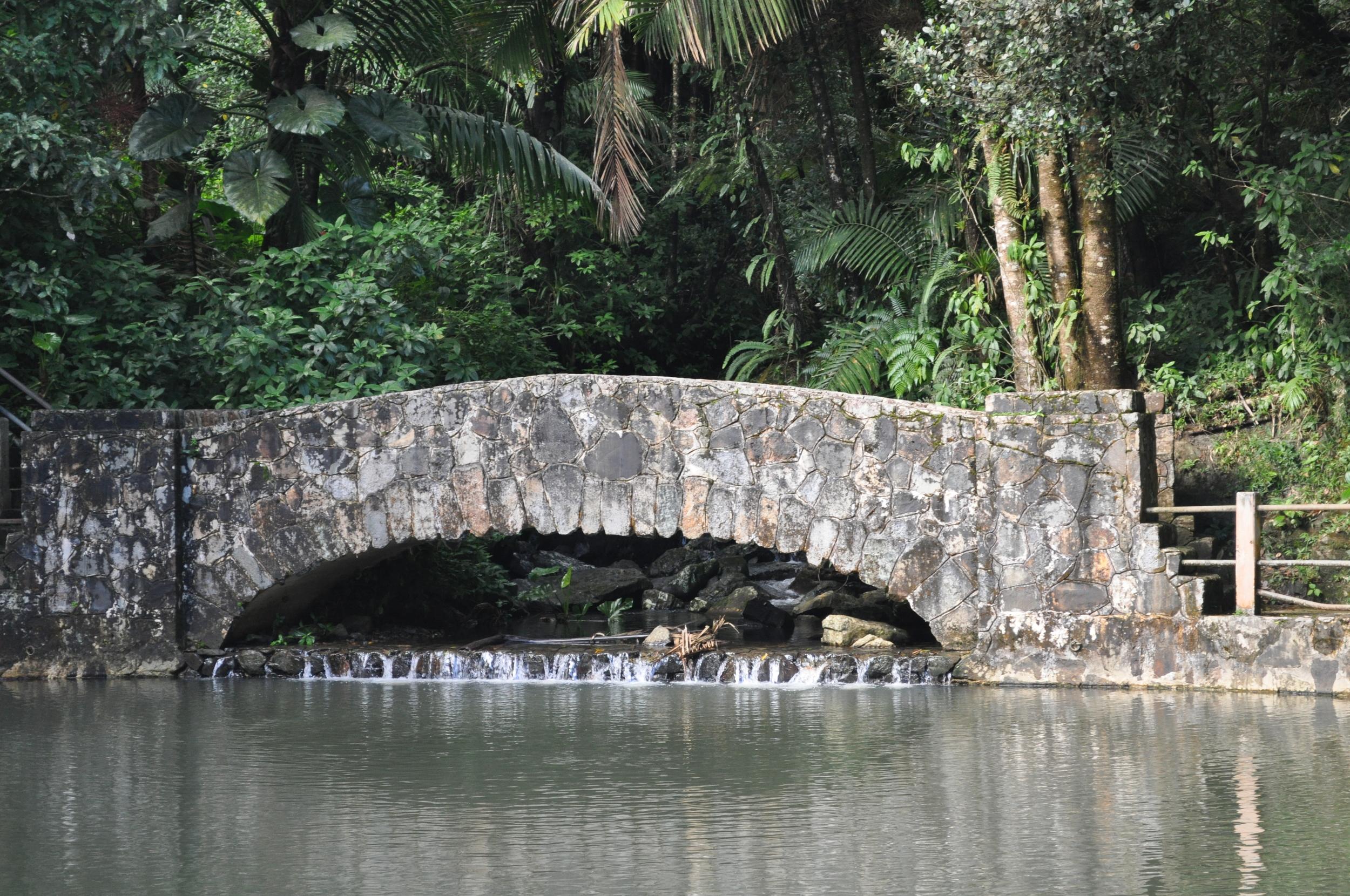 El paisaje verde de El Yunque es alucinante. Foto: Pamy Rojas