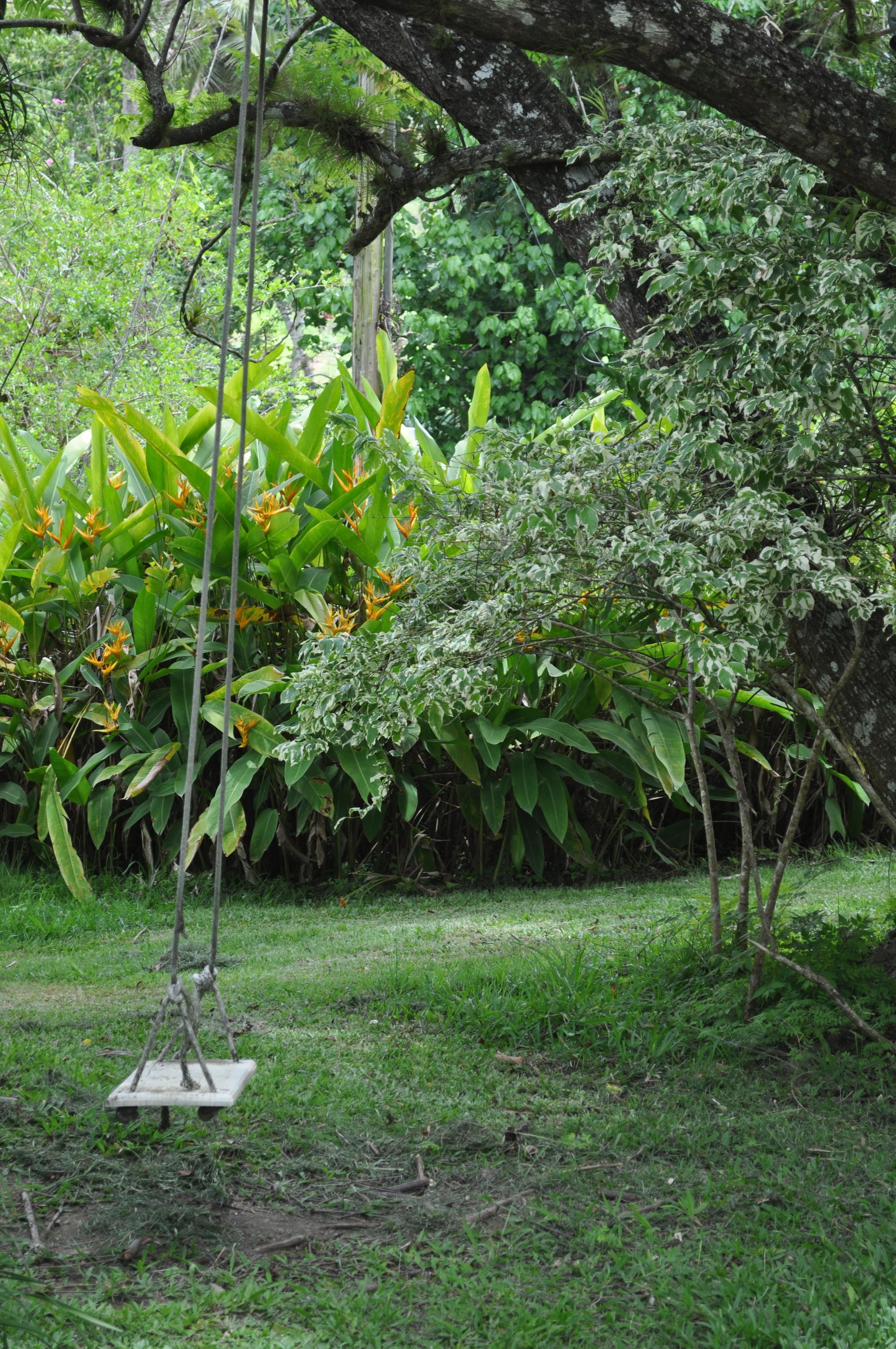 El árbol jabonero de la China tiene una historia que hay que escuchar. Foto: Pamy Rojas