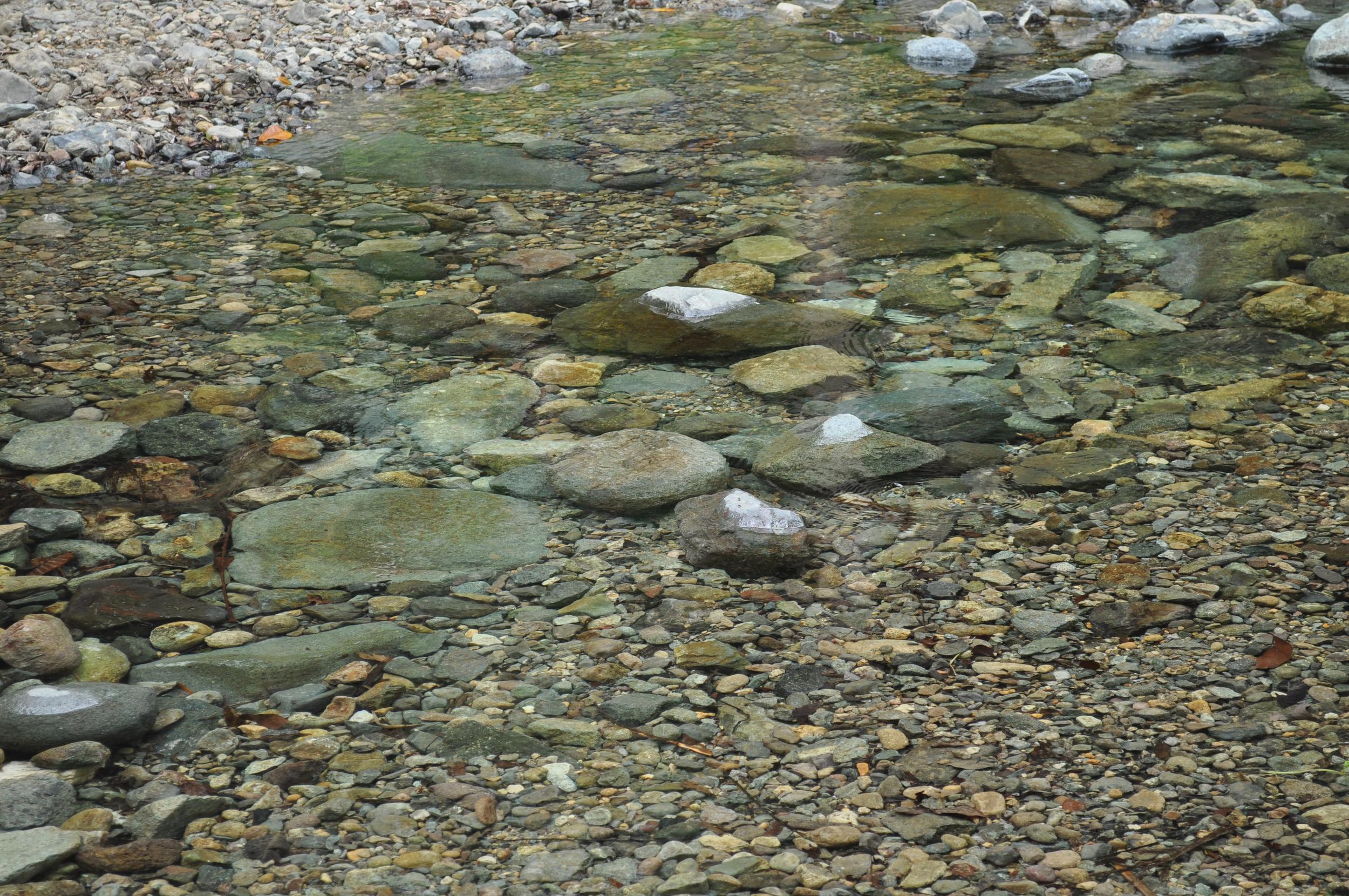Visitamos el proyecto comunitario de educación,conservación e investigación: Bosque Escuela La Olimpia, también en  Adjuntas . En este lugar de ciento cincuenta cuerdas nace el río Grande de Arecibo. Foto: Pamy Rojas
