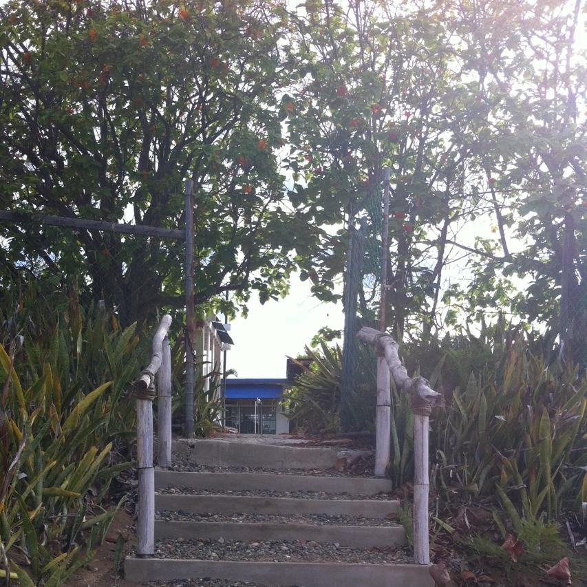 Casa Pura Bed & Breakfast  está localizada en Punta Pozuelo,  Guayama . Aquí las escaleras que llevan de la playa al patio repleto de árboles frutales. Esta fue nuestra hospedería durante los dos días de nuestra estadía en Guayama.Foto: Bruny Nieves