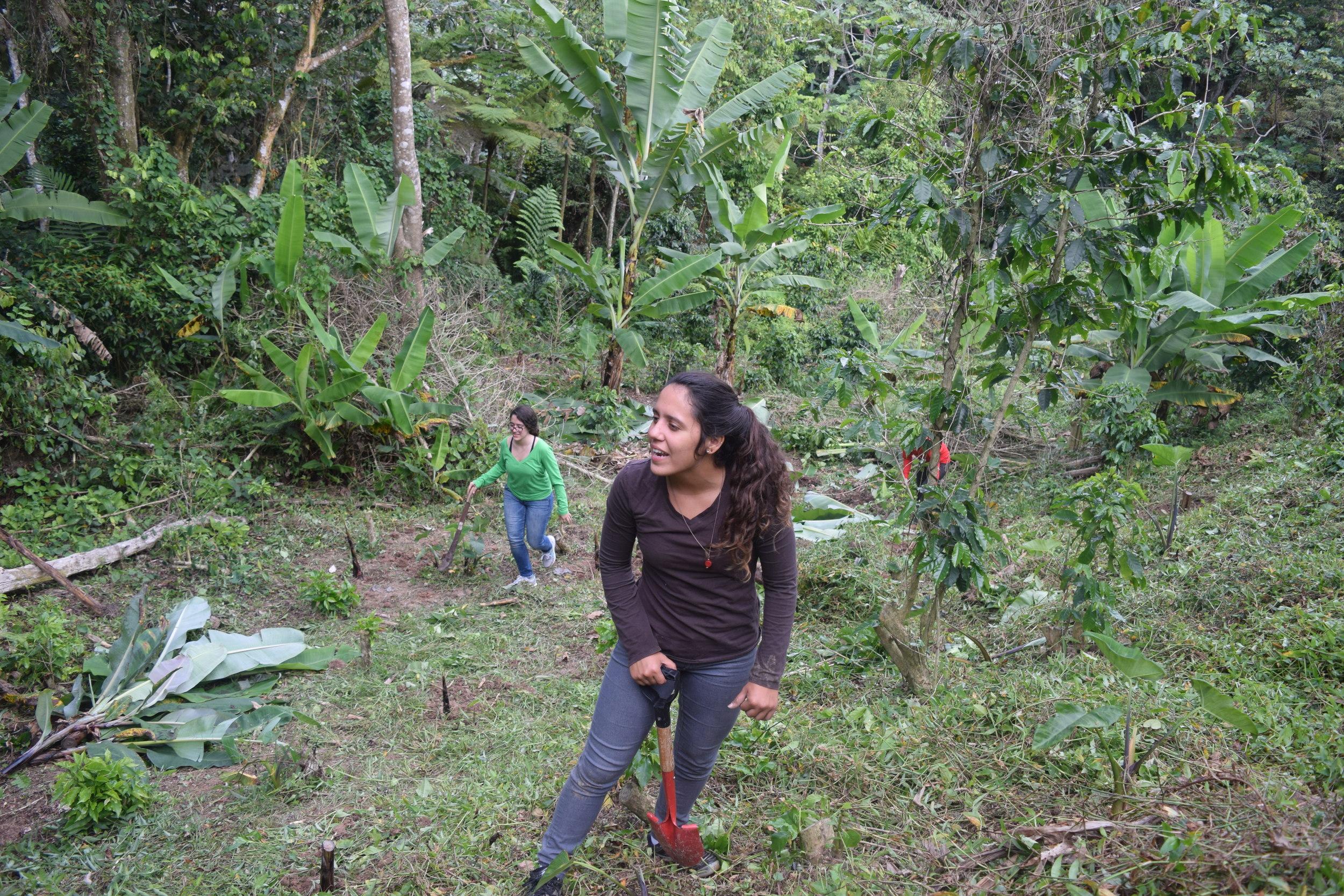 Al otro día,nos pusimos nuestras botas, algunos los zapatos viejos, agarramos machetes, palas, picos y azadas para empezar a trabajar. Comenzamos a mover ramas que habían sido podadas, preparamos bancos de semillas y resembramos matas de plátano y guineo. Foto: Alejandro Rodgz. Rojas
