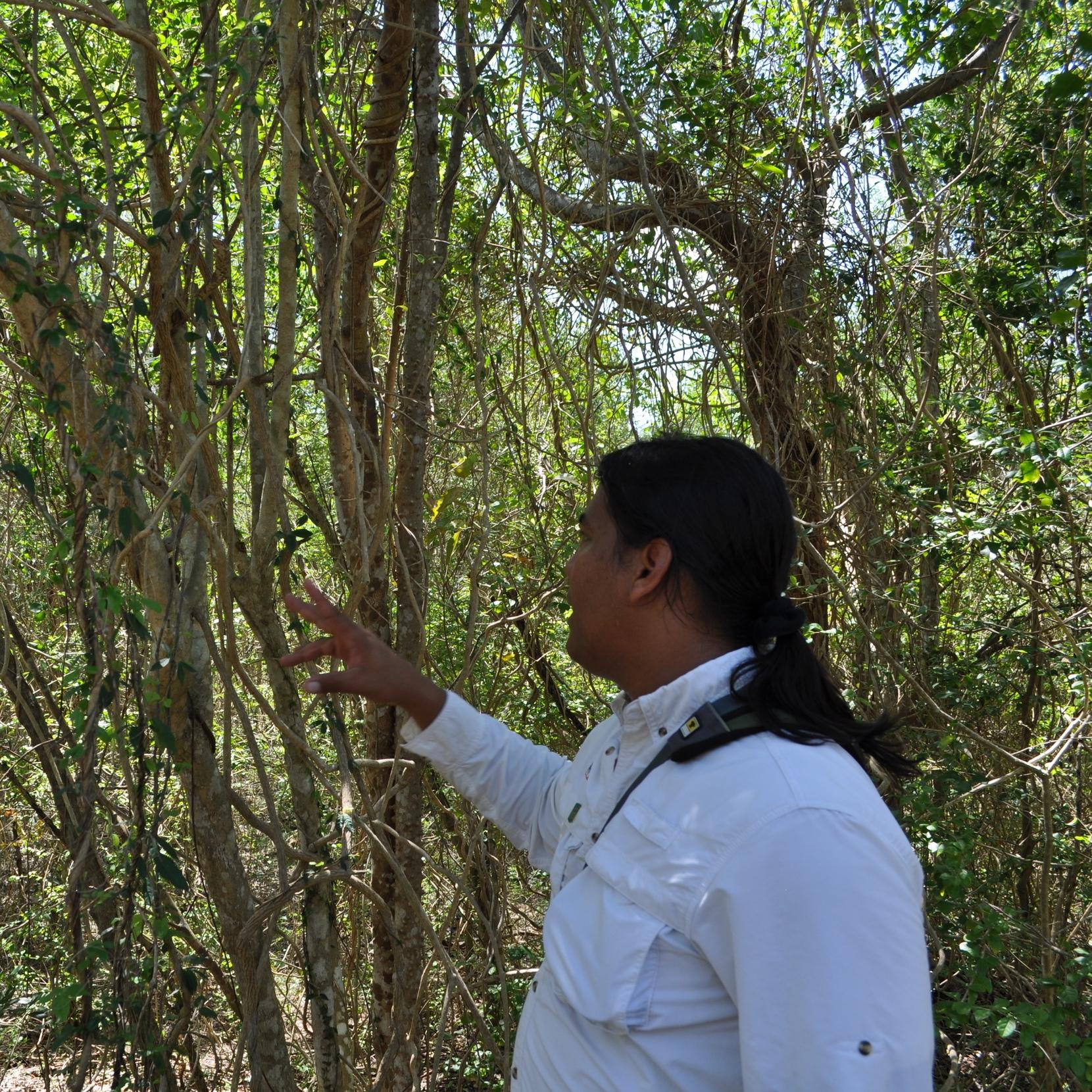 El intérprete consigue que los visitantes del lugar le encuentren sentido a lo que observan y de alguna manera desarrollen un apego hacia el entorno, logrando así, que más personas se interesen por la protección de la naturaleza. Foto: Pamy Rojas