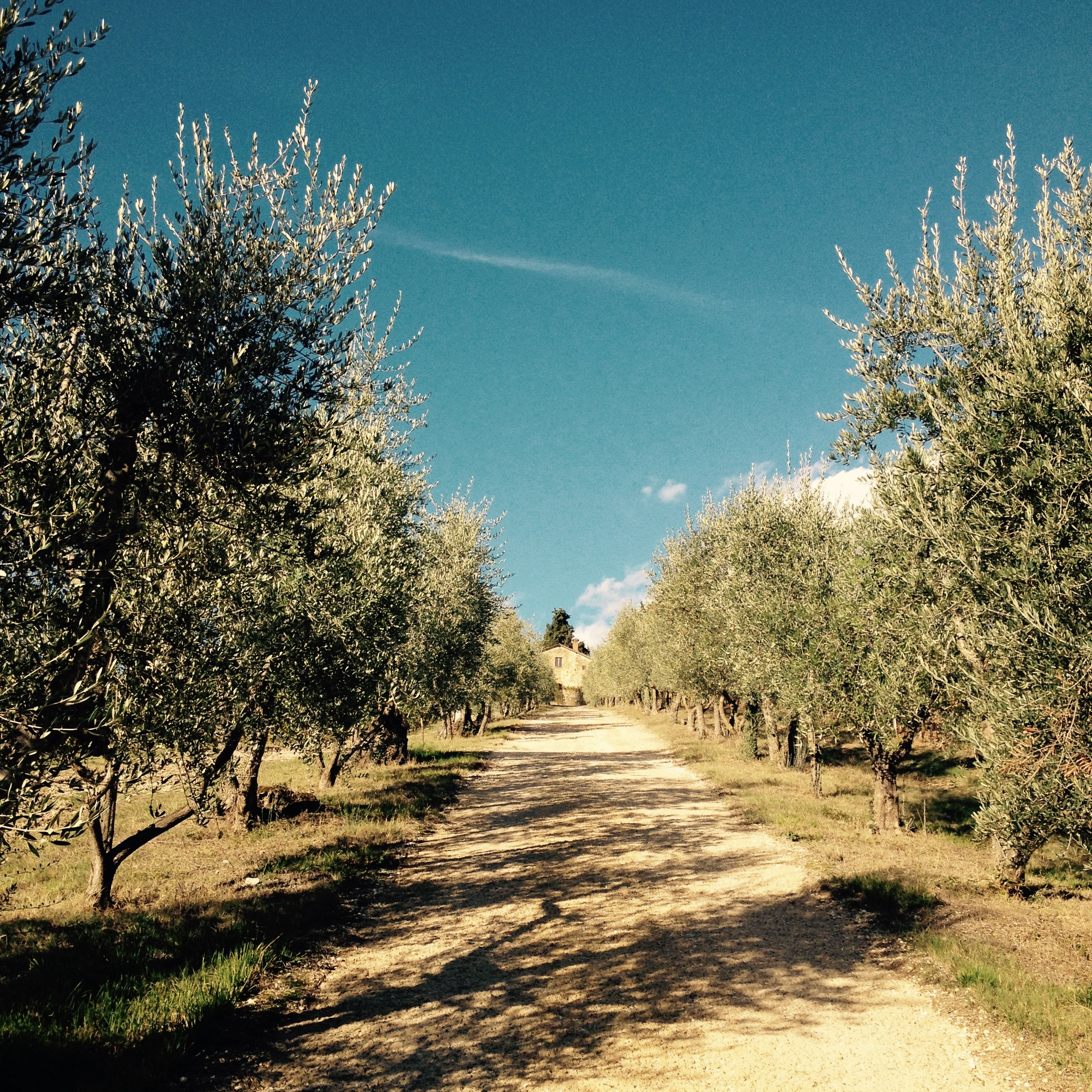 Olive trees adorn the path that leads to our agritourism. Photo: Marco Dettling
