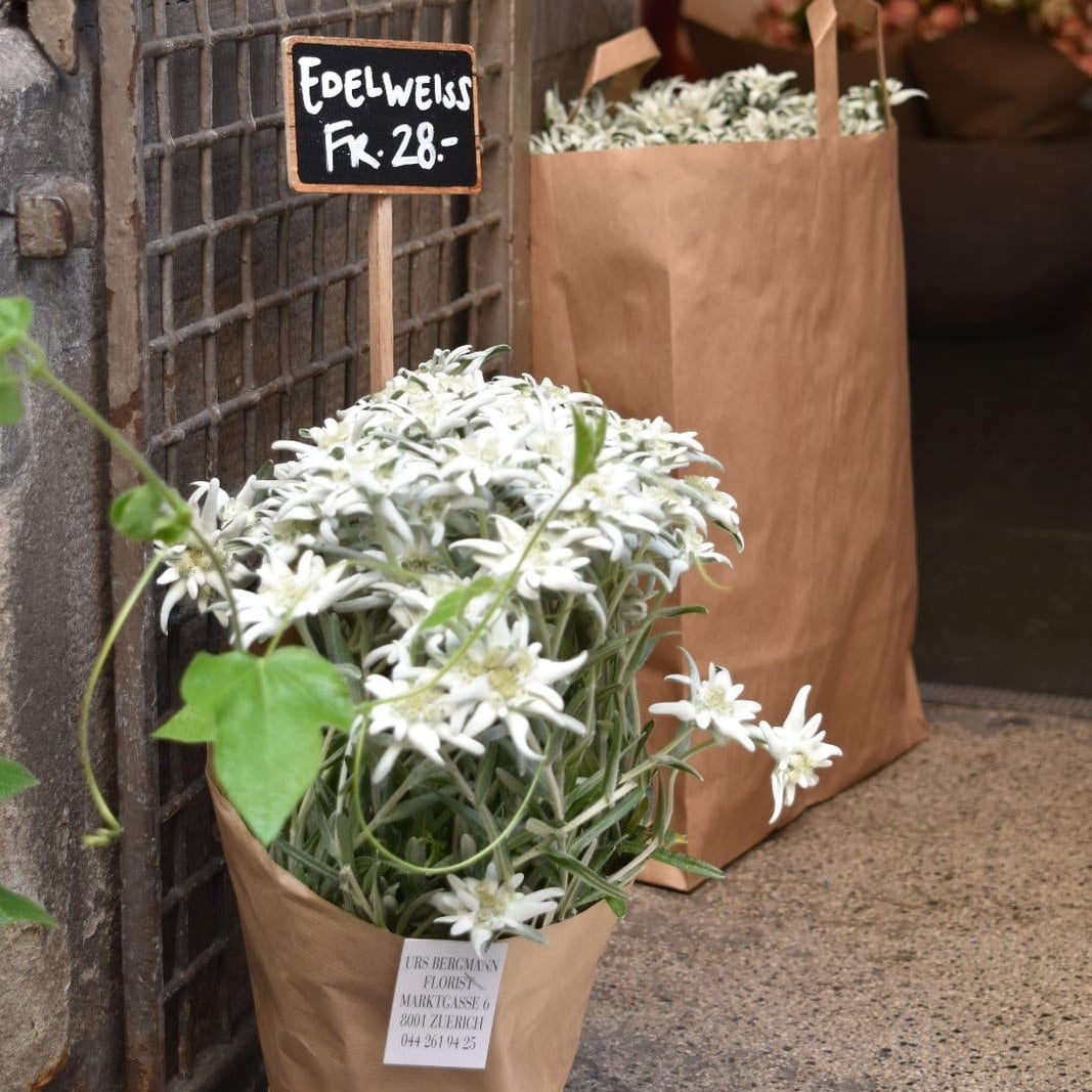 Flower shop with Edelweiss for sale; this mountain flower, symbol of the Alps, is very difficult to find. Photo: Bernardo Fiol