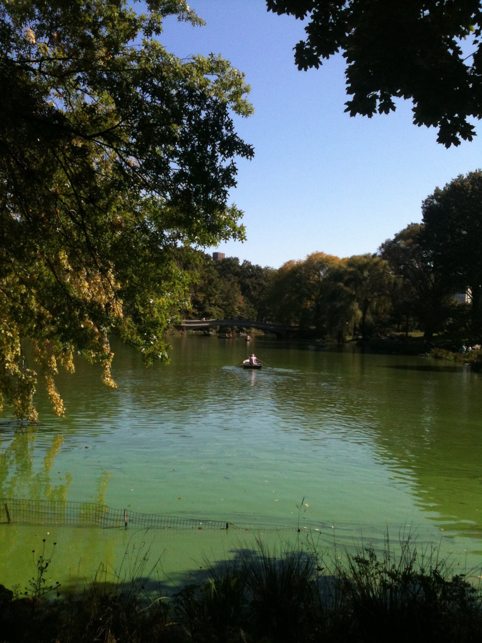 The Central Park Lake can be navigated in rental boats in Spring and Summer. Photo: Marco Dettling