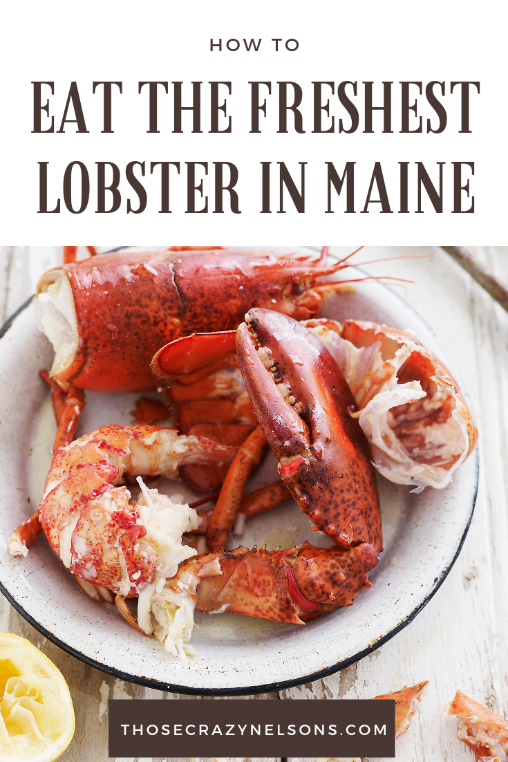 See Maine by train in 4 nights, Portland, Maine Lobster