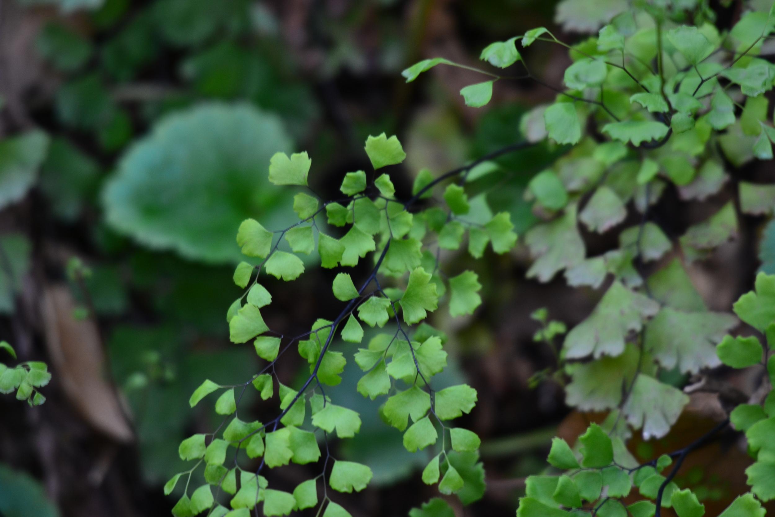 Native Flora, Windmill Waterfall, Pt. Mugu State Park, Thousand Oaks