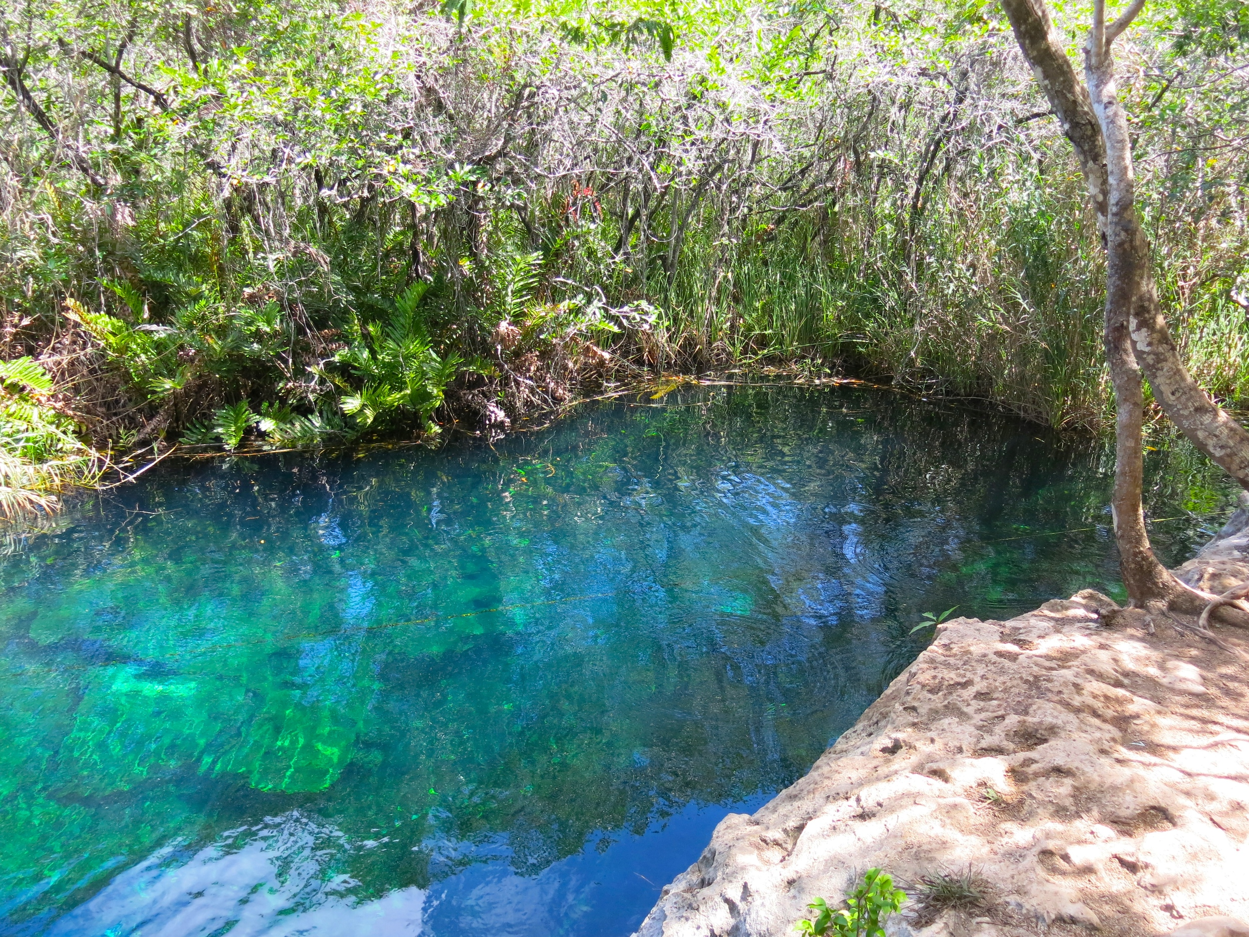 Escondido means hidden and is a well kept secret at that. This beautiful cenote is located off highway 307 just past Tulum. Your entry fee is paid at the adjacent Cenote Cristal (see notes below). When you leave Cristal's parking lot go directly across the highway. There you will find an unmarked dirt road with a closed metal gate. Open the gate and drive through the jungle for about a mile and you will reach Escondido.