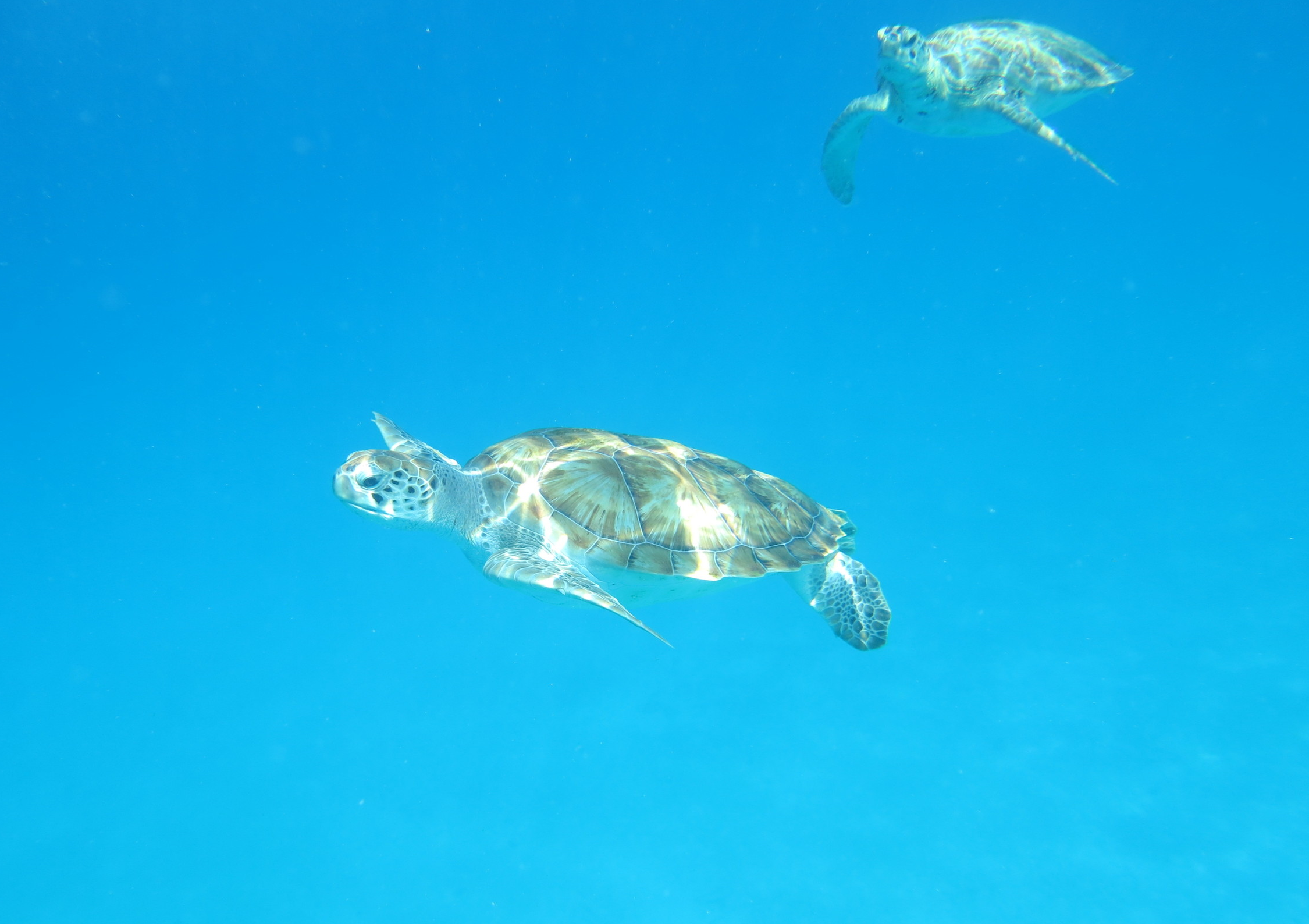 We were even able to jump off the catamaran and snorkel with some adorable sea turtles.