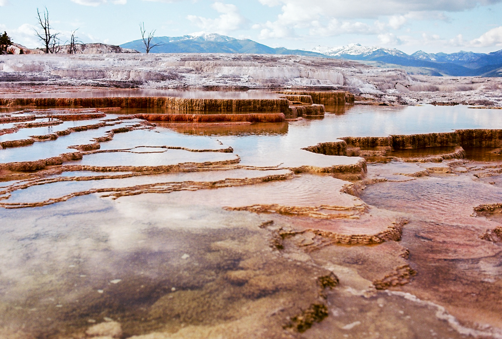 """Fountains of Youth"" Yellowstone National Park, WY (May 27, 2017)    Mammoth Hot Springs is, in my opinion, one of the eeriest places in Yellowstone. I loved the juxtaposition of this photograph; the ho  t, sulfuric springs in the foreground, the scarce dead trees nearby, and the towering snow-capped mountains off in the distance."