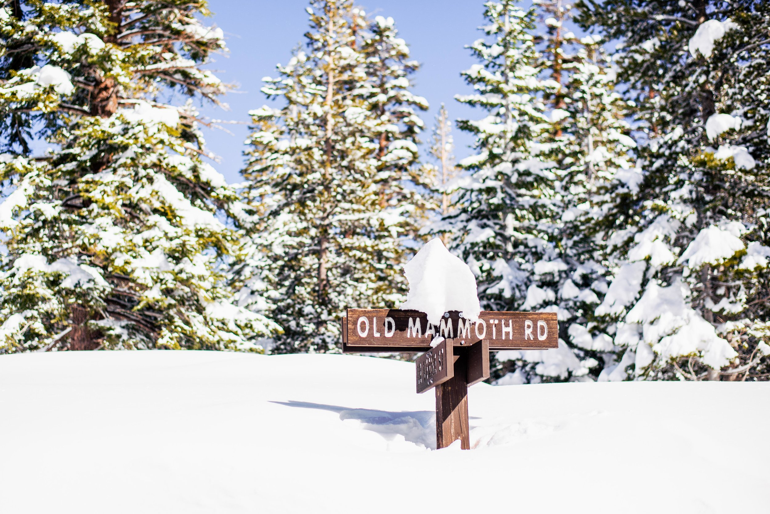 """Yield to Snow Ahead"" Mammoth Lakes, CA (February 18, 2017)    Last winter in California was a wet one, and the town of Mammoth Lakes received nearly 20 feet of snow (last time I checked). Most of the main roads were plowed when we visited, but many of them eventually just dead-ended at huge piles of plowed snow. It was a crazy time to be there."