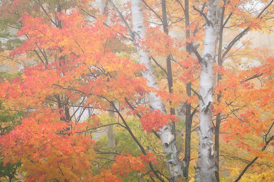 Autumn in Vermont, Photo by Sarah Marino