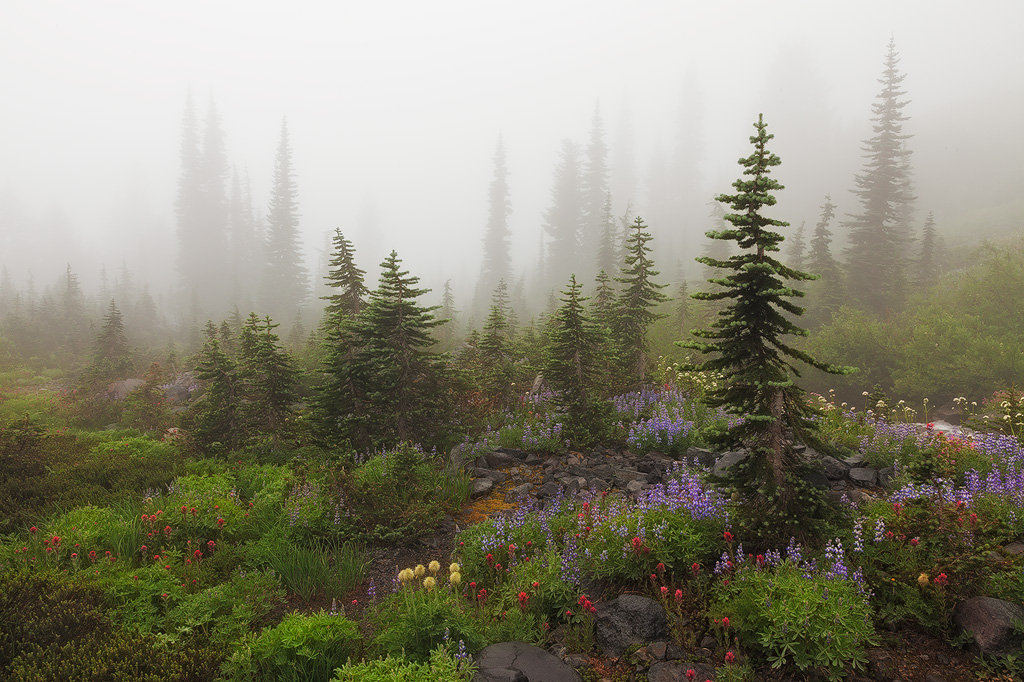 Alpine Garden - wildflowers and summer plants on a misty morning at Mount Rainier National Park.