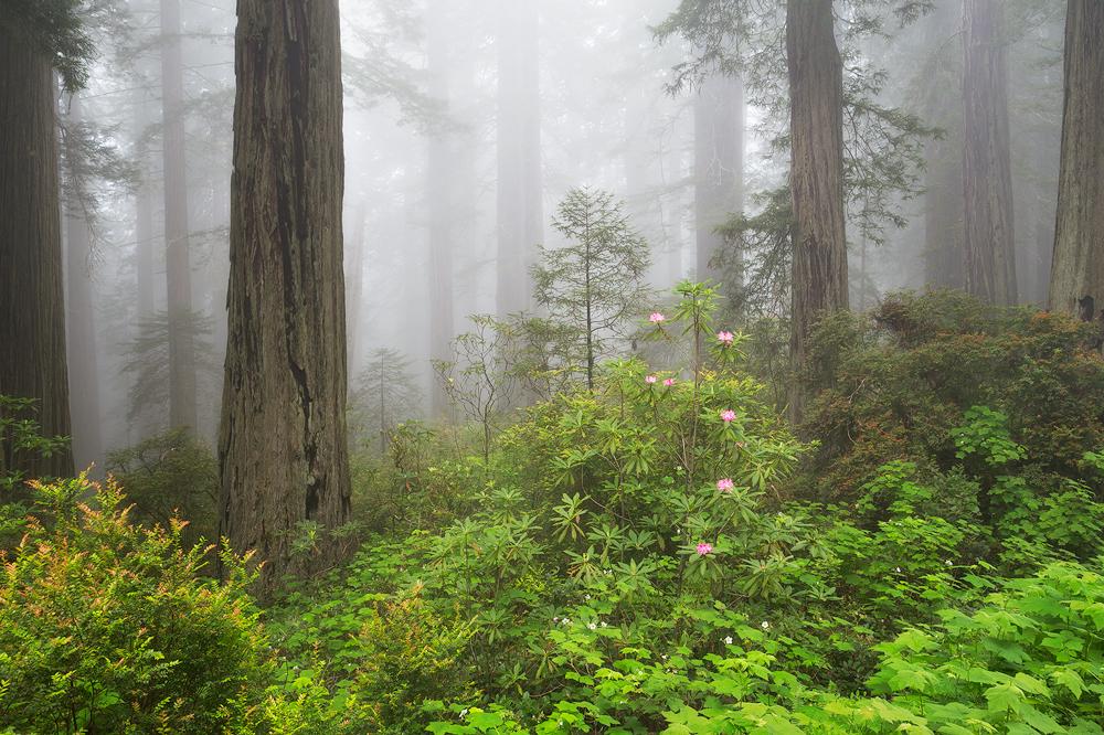 3. Redwoods National Park, California