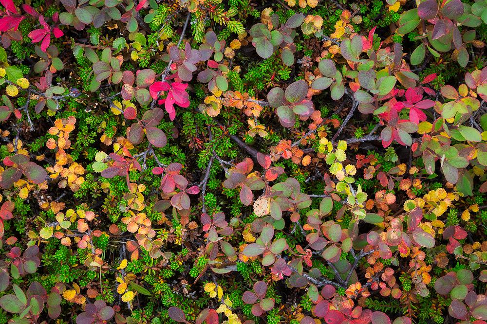 6. Autumn Medley, Iceland