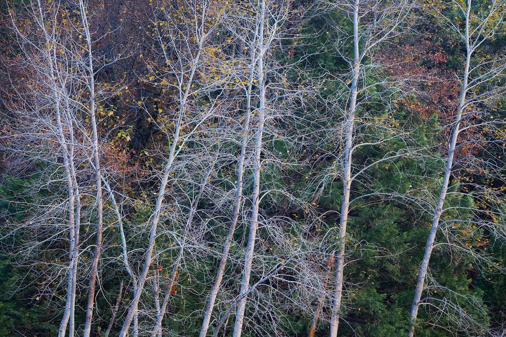 10. End of Autumn, Yosemite National Park