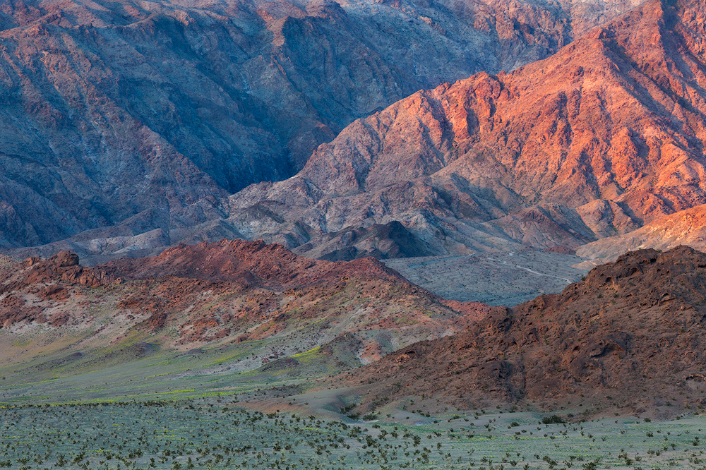 Distant wildflowers at the base of the Black Mountains in Death Valley National Park. (c) Sarah Marino