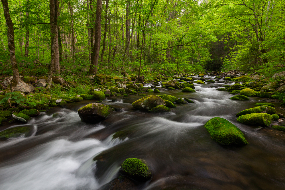 Great Smoky Mountains National Park, Tennessee. (c) Ron Coscorrosa