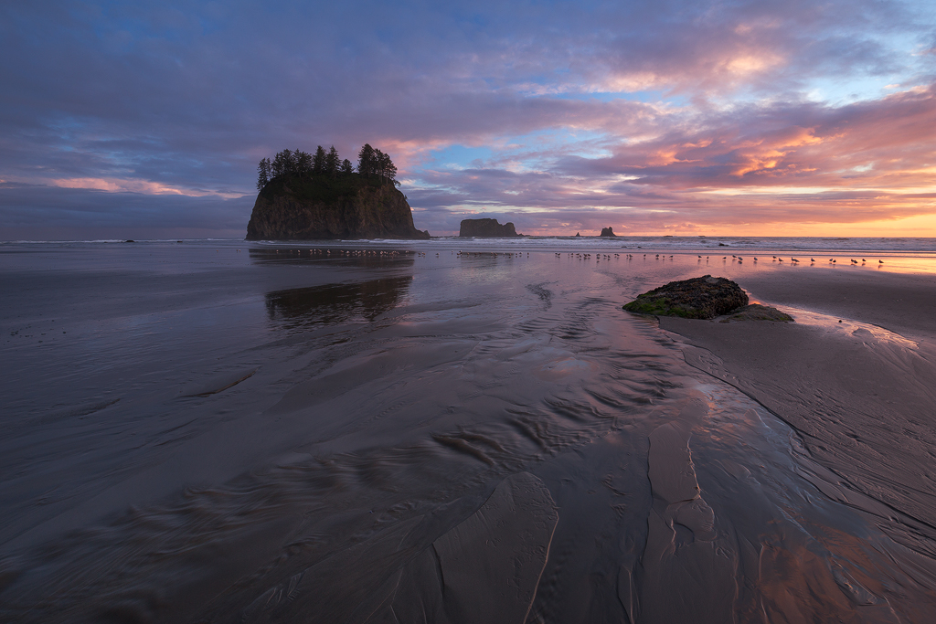 Olympic National Park, Washington. (c) Ron Coscorrosa