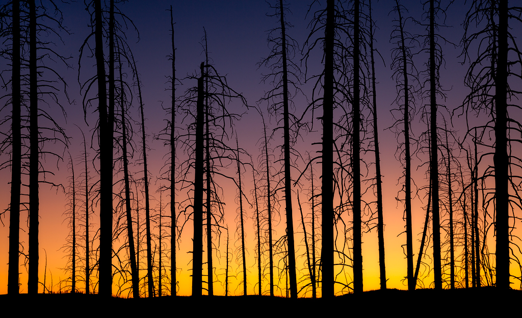 """""""Silhouetted Lodgepoles""""- Yellowstone National Park. The silhouette eliminates the distracting ground, and instead focuses attention on the dead trees and the smoke-infused sunset glow."""