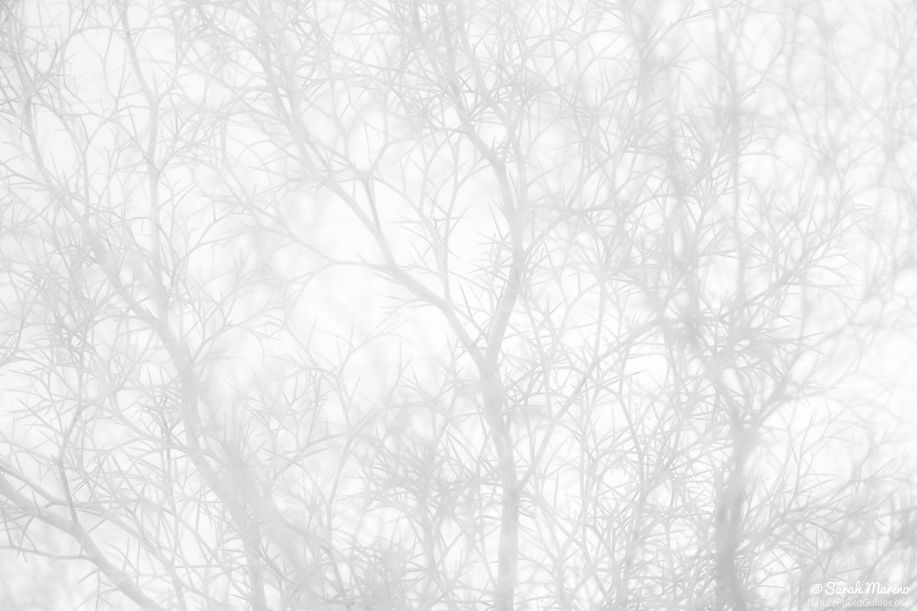 Sarah-Marino-Smoke-Tree-Abstract-Black-White-1200px.jpg