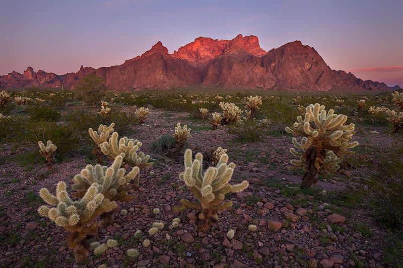 The Three Amigos - Sonoran Desert in Spring by Ron Coscorrosa