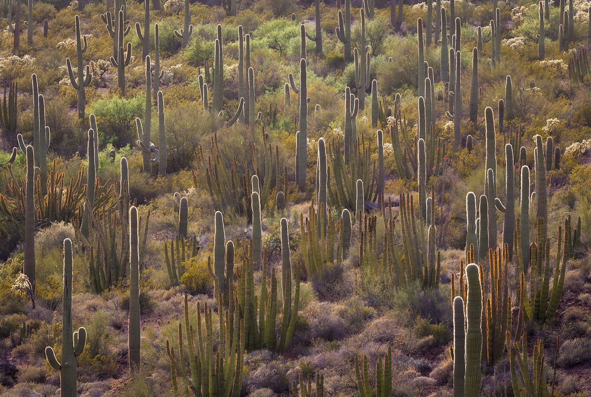 Saguaro and Organ Pipe Cactus in Arizona. Here, the subject is obvious: cactus plants. This photo relies on abstract qualities for the composition, including repetition,lines, and light. Since completely abstract subjects can be harder to identify, starting by looking for abstract qualities and using them in your composition can be a good place to start.