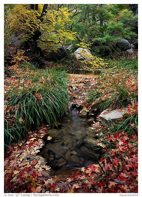 Stream in fall, Smith Springs. Guadalupe Mountains National Park, Texas, USA.