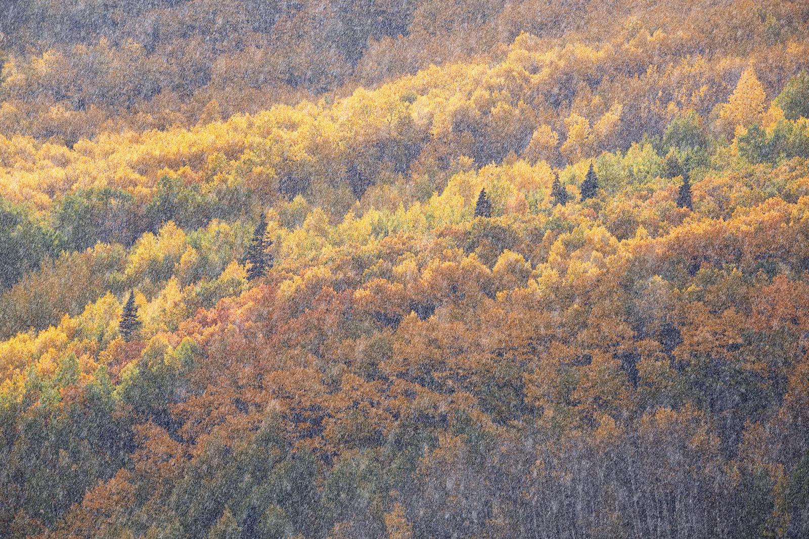"""""""Autumn Shower"""""""