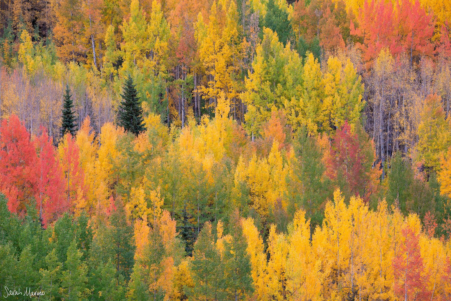 Autumn Mix, Colorado