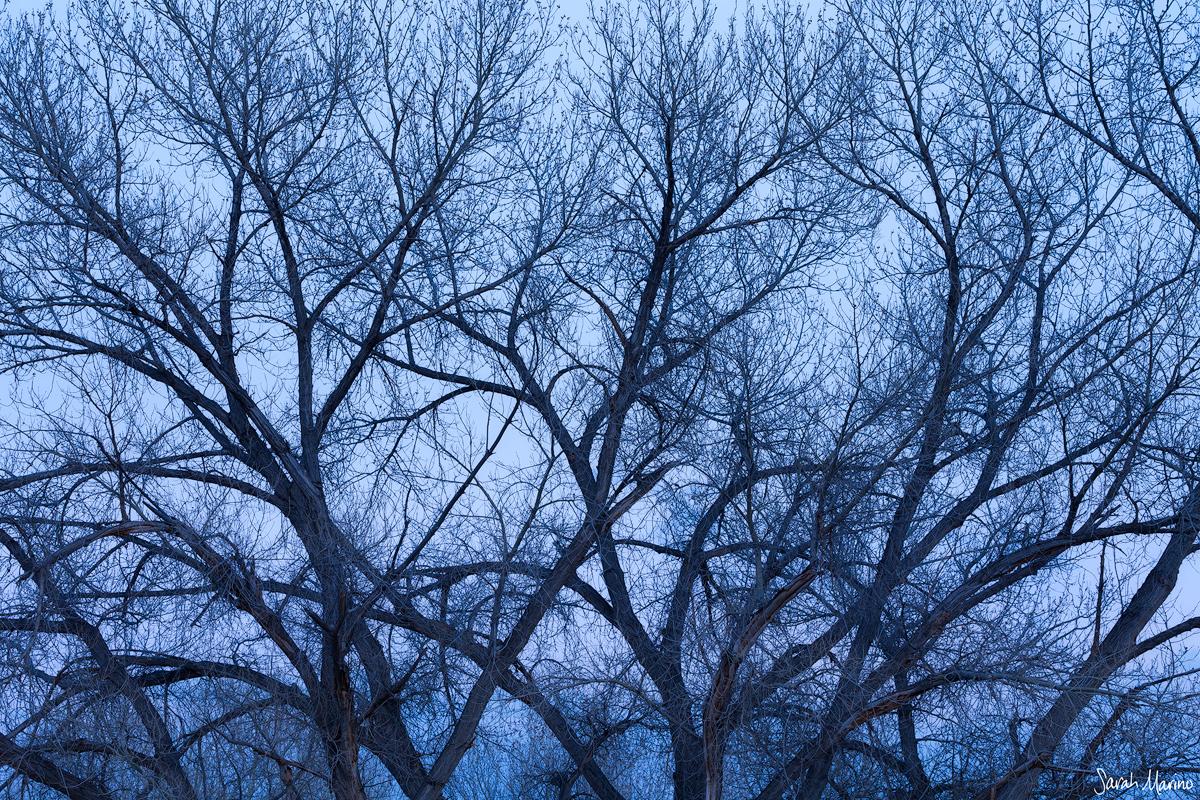 Winter Limbs, Arches National Park