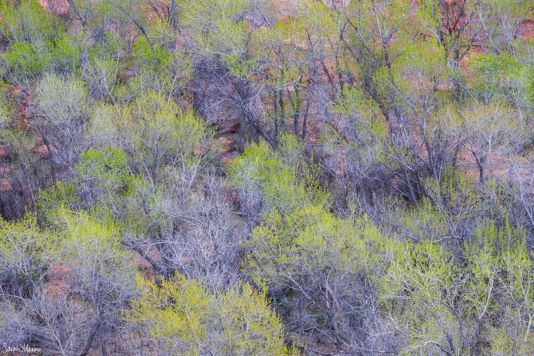 Sarah-Marino-Utah-Cottonwoods-1200px-Watermark.jpg
