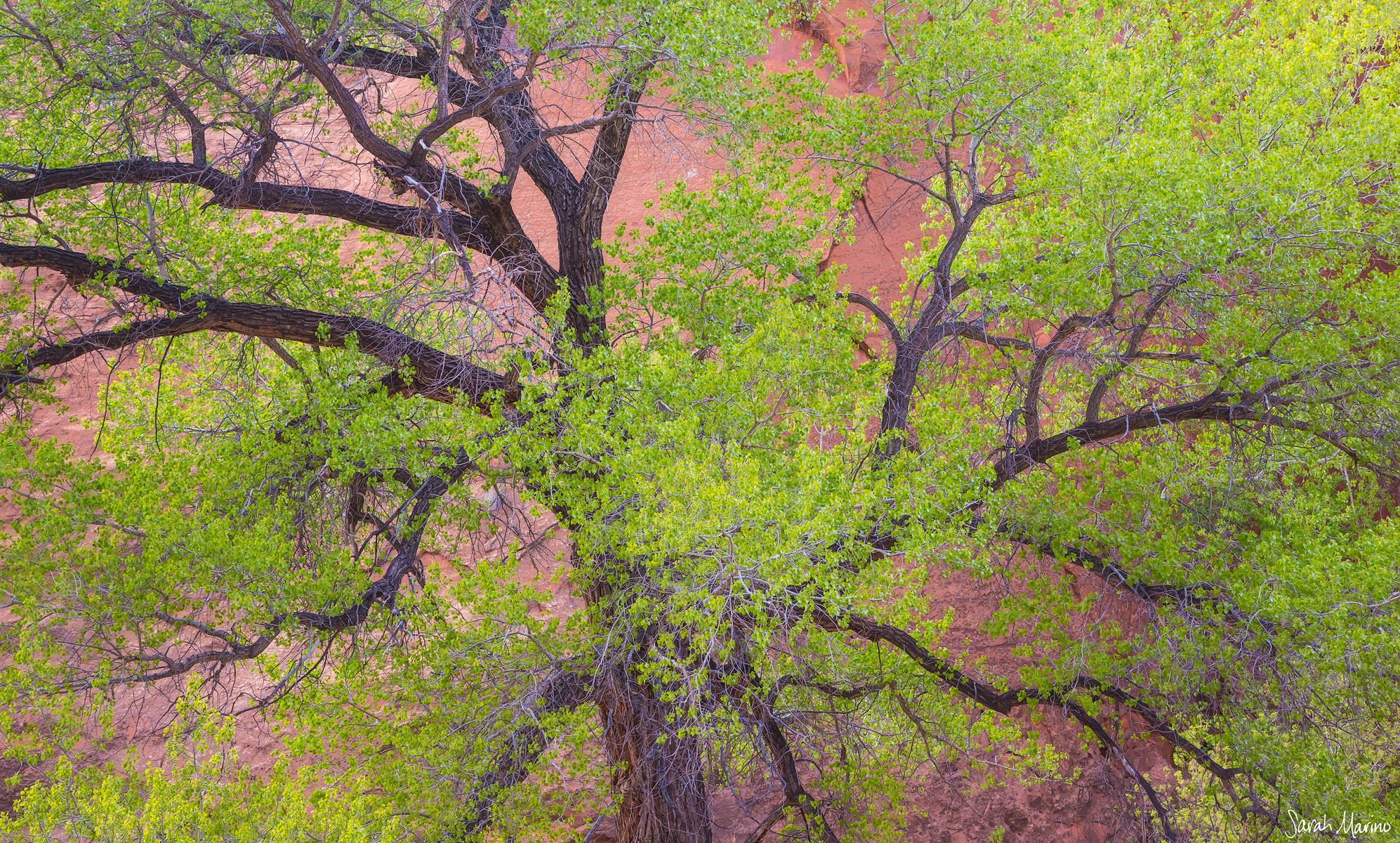 Sarah-Marino-Utah-Cottonwood-Web-1200px-Watermark.jpg