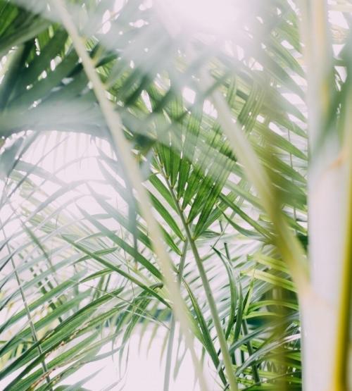 Bamboo scape.jpg