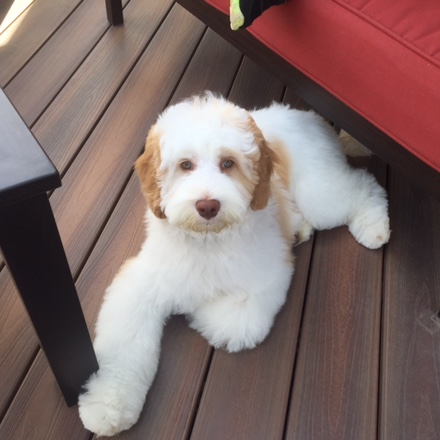 Maxwell at 5 months old hanging with his family and loving life.