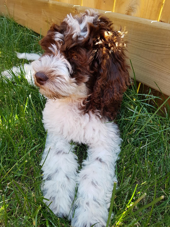 Hazel at 4 months